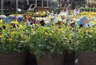 Visit the HTA Plant Show for our new online Plant Finder!
