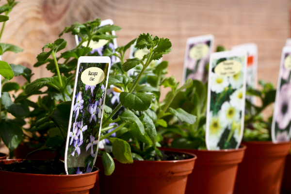 3 Tips to Sell Plants Online